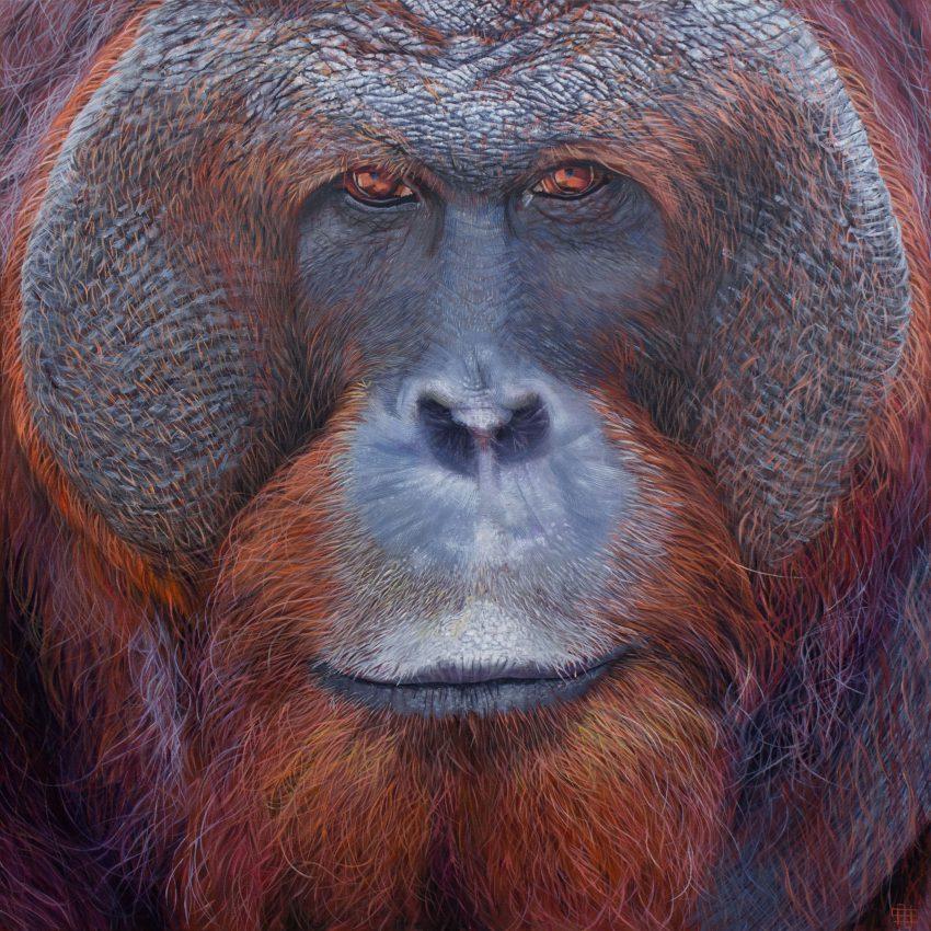 Orangutan (adult male)