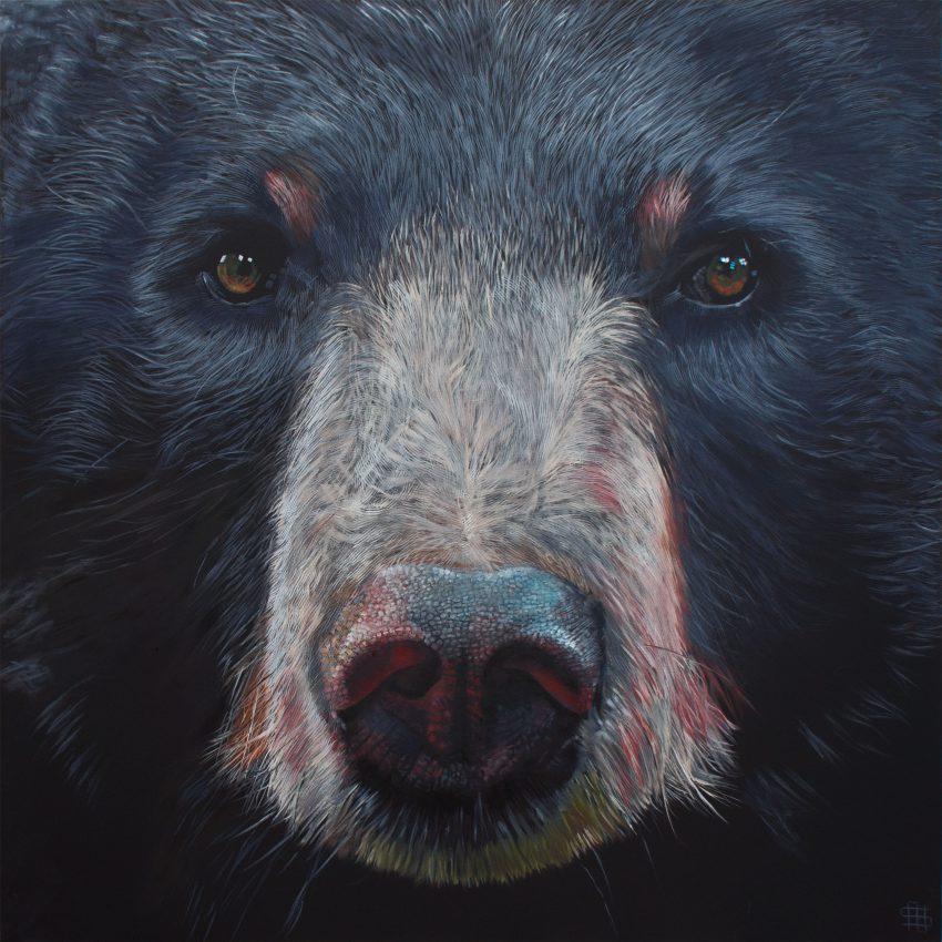 Moon Bear (Asiatic Black Bear)