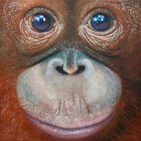Orangutan (infant)