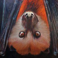 Mauritius Fruit Bat
